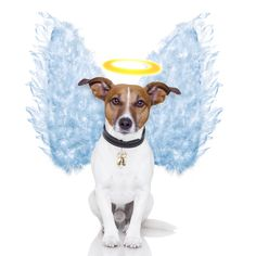 All good dogs go to heaven! #petloss