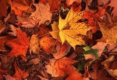 Leaf mold is good for your garden....5 FREE Soil Amendments