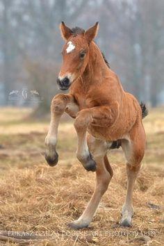 Leaping fuzzy foal!