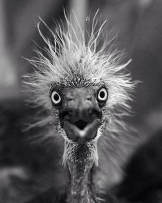 What I look like when unexpected company rings the doorbell!