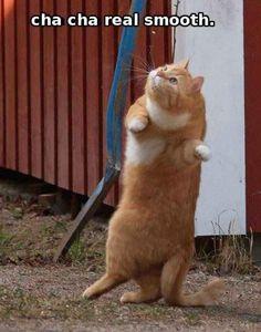 Cha cha cat! :D