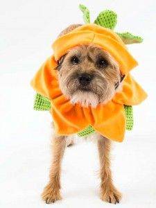 Howl-o-ween at Bosley's - what's Cinderella without her pumpkin? Add your pet to the story with our pumpkin costume