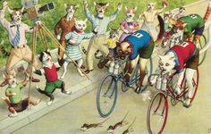 Cats on bikes