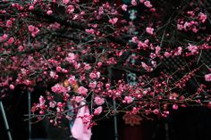 SAMSUNG NX30 으로 만나는 꽃과 봄