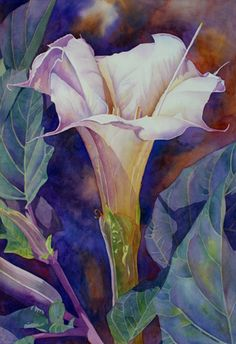 Cheryl Weinfurtner: Sunrise Nightshade. Jimson Weed begins to fade as the Mojave Sun rises over the desert.