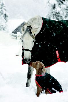 Horse and dog in matching Horseware Rambo rugs in the snow.