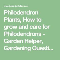 Philodendron Plants, How to grow and care for Philodendrons - Garden Helper, Gardening Questions and Answers