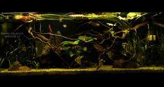 Amazon biotope tank