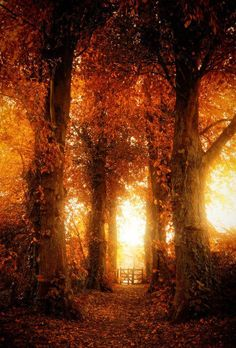 Beautiful Autumn Light.