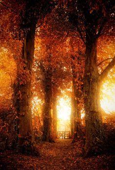 Beautiful Autumn Light.