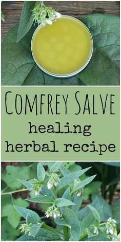 Natural Remedies Learn how to make your own homemade healing comfrey salve. Comfrey has many medicinal benefits and is excellent for helping to heal minor wounds. Cold Home Remedies, Natural Health Remedies, Natural Cures, Natural Healing, Herbal Remedies, Natural Treatments, Natural Oil, Natural Foods, Natural Products