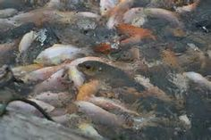 1000 images about fish raised in florida ponds for the for Fish farms in florida