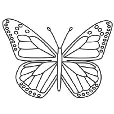 Flying Queen Butterfly Coloring Pages   Butterflies   Pinterest ...