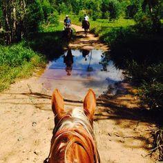 Horse riding through the Noosa Hinterland with Noosa Horses!