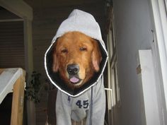 """Rusty became known as the """"sweatshirt dog"""" around our neighborhood. The sweatshirt was to protect his skin from his scratching. He also wore boots on his rear paws."""