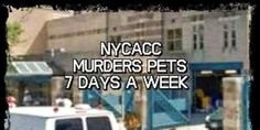 Please sign!!! REMOVE RISA WEINSTOCK AS EXECUTIVE DIRECTOR OF THE NYC ANIMAL CARE & CONTROL