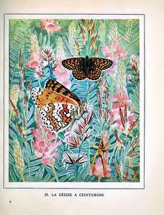 La Déesse à ceinturons [Heath fritillary butterfly] (1934)