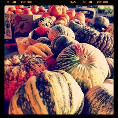 Day Bay Area Moment in Castro Valley. Castro Valley, Pumpkin Display, Bay Area, Graham, In This Moment, Day, Instagram Posts