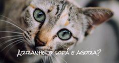 Porquê não se deve borrifar água no gato quando ele arranha o sofá (catnip poderá ser uma solução) | Sílvia F. Silva | Pulse | LinkedIn