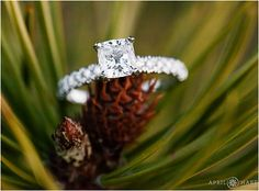 Engagement ring photographed in the mountains of Colorado after a surprise proposal. - April O'Hare Photography http://www.apriloharephotography.com #EngagementRing #Squarecutengagementring #PineCone #ColoradoWedding