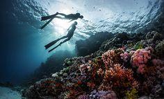 dancing and diving