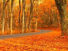 """Autumn is one of the most beautiful times of year in Virginia, and traveling throughout the state during this season can reveal an abundance of colour."" ~ Photo by.Candice Trimble/Your Take© >> Amazing Photography, Art Photography, Beautiful Places, Beautiful Pictures, Beautiful Scenery, National Weather, Shenandoah National Park, Fall Photos, Season Colors"