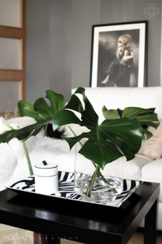 Place Cut Monstera Leaf Or Any Decorative Leaf In A