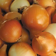 History and how to grow Yellow Parma Onions