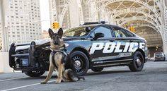 Ford Police Responder Hybrid Sedan, futuro eléctrico hoy - http://autoproyecto.com/2017/04/ford-police-responder-hybrid-sedan.html?utm_source=PN&utm_medium=Pinterest+AP&utm_campaign=SNAP