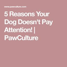 5 Reasons Your Dog Doesn't Pay Attention! | PawCulture