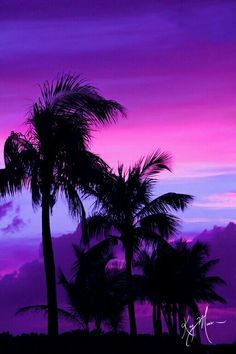 Palm trees silhouetted against the sky in Key West, FL Purple Mountain Majesty, Foto Top, Purple Sunset, Purple Beach, Pink Purple, Sunset Wallpaper, Tree Photography, Pretty Wallpapers, Nature Pictures
