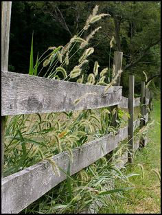 old fence & tall grass...
