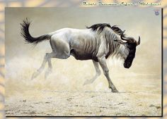 High quality white horse oil painting on canvas arthorse,bird,cat.dog and deer Sheep Paintings, Wildlife Paintings, Wildlife Art, Animal Paintings, Art Paintings, Africa Art, Out Of Africa, Software Libre, Batman