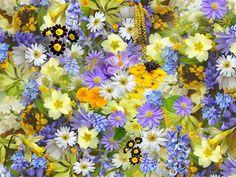 Portugal é um país privilegiado, cheio de cores e aromas proporcionados por plantas magníficas! As caraterísticas ambientais de Portugal continental promovem uma grande diversidade de vegetação, ad…