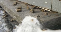 Wisconsin Beekeepers Report Losing High Numbers Of Bees This Winter Bee Keeping, Wisconsin, Bees, Numbers, Public, Winter, Honey Bees, Numeracy, Winter Fashion