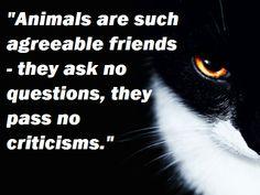 animals, cats, friends http://sulia.com/internetcats/