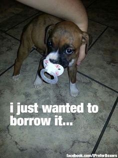I can't even stand it!!!! Sooooooooooooo cute! What a precious little smooshie face!