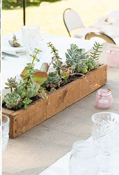 Wooden planter--different feel for succulents.