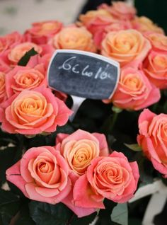 Roses from the Paris markets