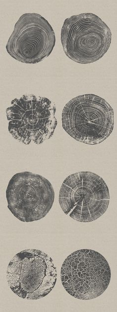 This shows geometric patterns in the repeated circular shapes giving a sense of sequentiality whilst mixing in elements of organic with its patterns reminiscent of tree stumps. Organic Forms, Organic Structure, Organic Art, Organic Shapes, Organic Patterns, Simply Organic, Natural Form Art, Natural Texture, Natural Shapes