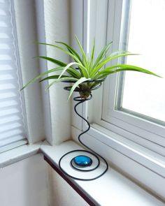 Wire Air Plant Holder Tall Quirky by glassetc on Etsy, $16.99