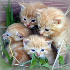 Kittens More