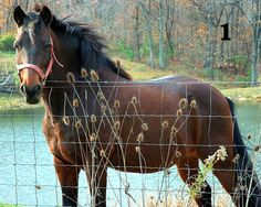 READY TO FRAME!  $8.99 + FREE SHIPPING!  Horse 8x10 Full Color Print - Choose from 5 designs!
