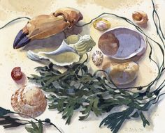 Sea Shore Souvenirs I Ronald Jesty Watercolor Sea, Watercolor Paintings, Harry Rocks, Painting Still Life, Shell Art, Fine Art Gallery, Medium Art, Natural History, Giclee Print