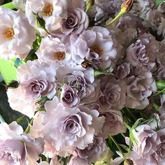 Eloquence spray roses showing off and doin their thang over in the designer corner today...happy Thursday! Hope everyone is having a great week and y'all are ready to take on the weekend! 😁#eloquencesprayroses #lavendersprayroses #californiagrownflowers #lavenderflowers #weddingflowers #flowerinspiration #florabundancedesignercorner #florabundanceflowerview #todaysflowerview #cagrown #wholesaleflowers #spreadlovewithflowers #passionateaboutflowers #florabundance #florabundanceinc