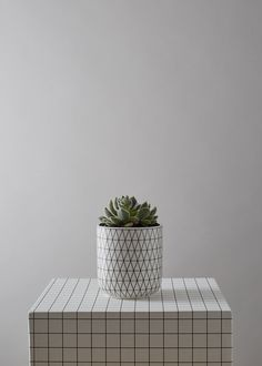 Geometric White Plant pot with Succulent or Cacti
