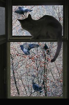 """Opie and Mittens Go Bird Watching"" by Nancy S. Cool Cats, I Love Cats, Crazy Cats, Gato Animal, Mundo Animal, Gatos Cool, Cat Window, Window View, Image Chat"