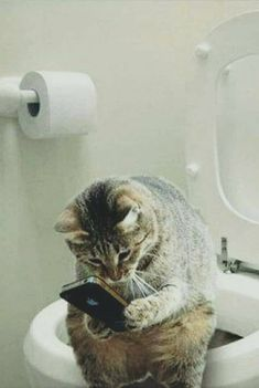 Texting the dog - LOLcats is the best place to find and submit funny cat memes and other silly cat materials to share with the world. We find the funny cats that make you LOL so that you don't… Funny Animal Memes, Cute Funny Animals, Cute Baby Animals, Funny Cute, Animals Dog, Hilarious, Cute Cats And Kittens, Kittens Cutest, Kitty Cats