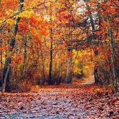 November Walk by incolor16
