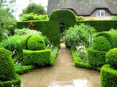 Beautiful yew hedges and topiary in Hidcote Manor's White Garden.